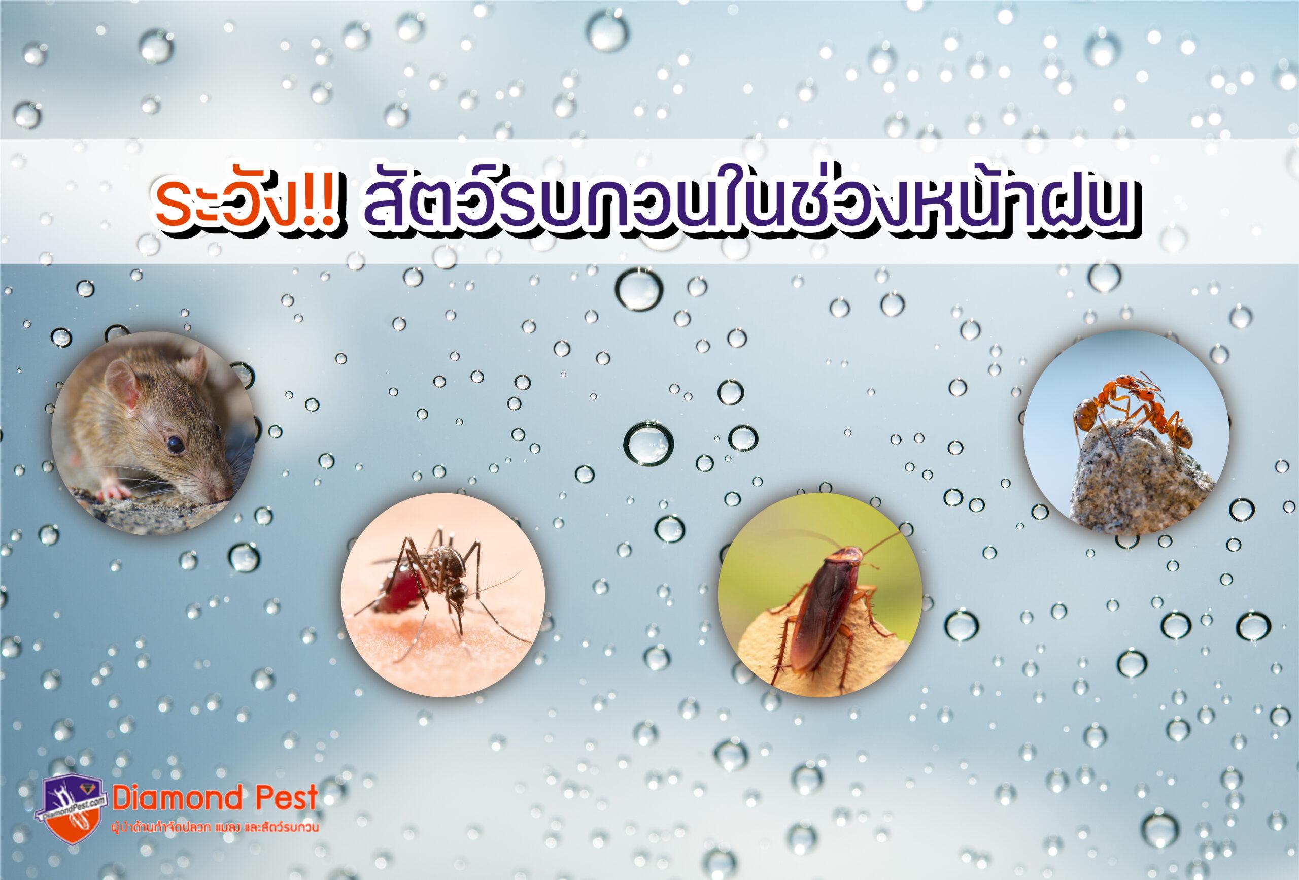 ระวังสัตว์รบกวนช่วงหน้าฝน