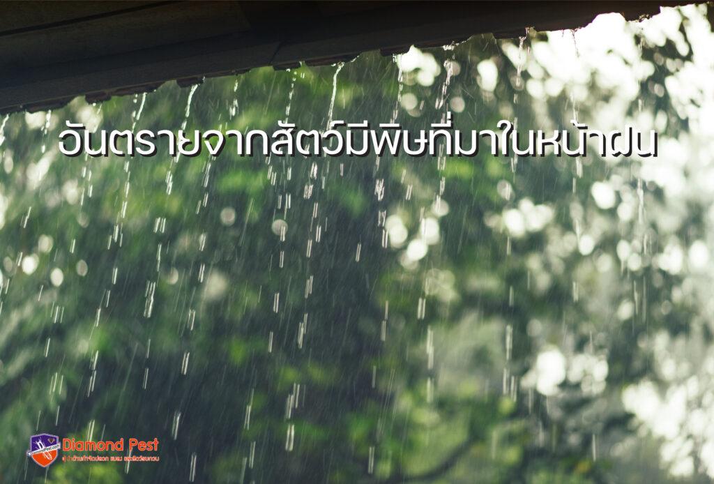 อันตรายจากสัตว์มีพิษที่มาในหน้าฝน