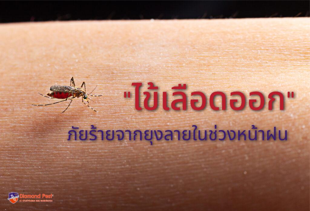 ไข้เลือดออก ภัยร้ายจากยุงลาย