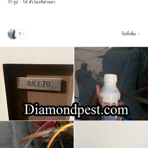 S__22282271